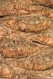 Date-palm's bark Stock Image