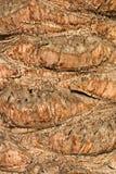 Date-palm's bark Stock Image