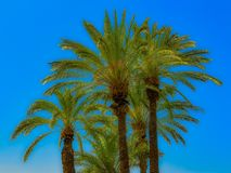 Date Palm, Sky, Vegetation, Tree Royalty Free Stock Images