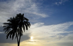 Date Palm in the sunset Stock Photography