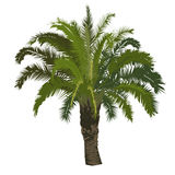 Date palm tree in color Stock Photo