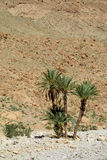 Date palm tree in desert mountains Stock Photo