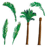 Date Palm tree kit Stock Images