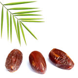Date palm tree Stock Photos