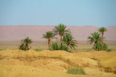 Date palm tree oasis Royalty Free Stock Images