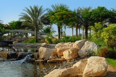 Date palm trees in park. Date palm trees in zabeel park, Dubai Stock Photos