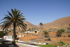 Date palms on the edge of the village Royalty Free Stock Image