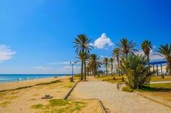 Date palms on the sunny beach in Hammamet Tunisia Royalty Free Stock Photo
