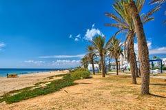Date Palms on sunny beach, Hammamet, Tunisia, Mediterranean Sea, Stock Photo