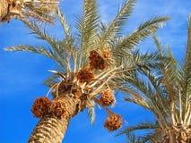Daten an der Palme Stockbilder