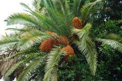 Daten an der Palme Stockbild