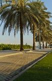 Daterar palmträd Arkivfoton