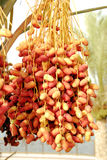 Dates stock images