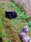 Dates de chats Image libre de droits