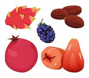 Dates, Dragonfruit, mûre, grenade, et Rose Apple Image stock