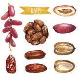 Dates, ensemble peint à la main d'aquarelle Image libre de droits