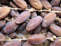 Dates fruit. Dried dates fruit background Royalty Free Stock Image