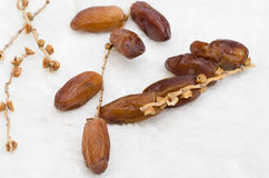 Dates fruit. On golden tray royalty free stock photos