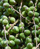 Dates from a Palm tree. Closeup of a dates from a palm tree, ideal for a background Stock Photo