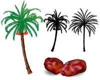 Dates Palm trees and fruit - vector illustration Royalty Free Stock Photo