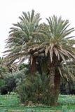 Datez les plantations Images stock