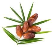 Datieren Sie Früchte und Blatt der Palme, Spitzen-wiew Stockfoto
