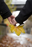 Dating couple at fall. Maple leaf in hands Stock Photos