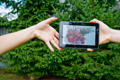 Dating. Man giving woman flowers displayed on tablet. Modern dating concept Stock Photography