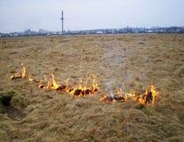 Dato fuoco ad erba asciutta vicino allo stabilimento Immagini Stock Libere da Diritti