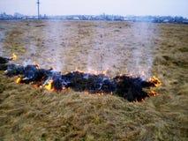 Dato fuoco ad erba asciutta vicino allo stabilimento Fotografia Stock Libera da Diritti