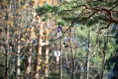 Datorskivor hänger på ett träd i skogen denna prydnad arkivbilder