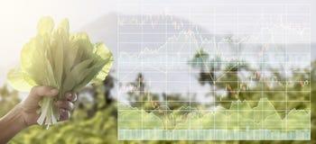 Datos de la información del índice del mercado de acción sobre negocio de la agricultura Granja Foto de archivo libre de regalías