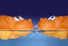Datte orange Image stock