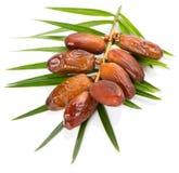 Dattelfrüchte und Blatt der Palme Stockfoto