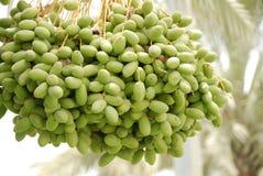 Dattelfrucht Stockfoto