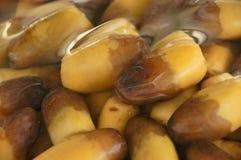 Datteln dates yellow brown frish royalty free stock image