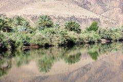 Dattelpalmen und Büsche mit Reflexionen im Draa-Fluss. Lizenzfreie Stockbilder