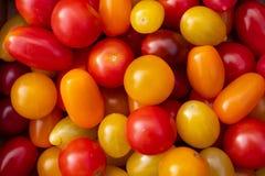 Datterino och körsbärsröda tomater av tre färger royaltyfri foto