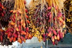 Dattes fraîches au marché de Jéricho Photo stock