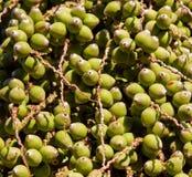 datuje drzewka palmowego Fotografia Stock