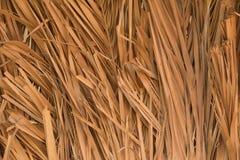 Datuje drzewko palmowe liści tło fotografia stock