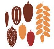 Datum. Frukt vektor illustrationer