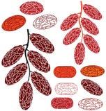 datum Frukt stock illustrationer