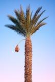 Datum-gömma i handflatan treen ovanför den ljusa skyen Arkivfoton