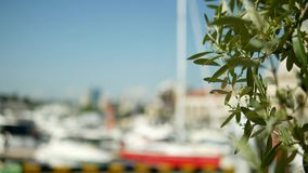 Datumbladeren op een vage achtergrond zeehaven met witte masten van jachten en schepen op zee stock foto's