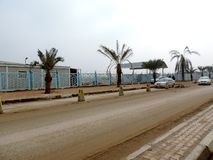 Datumbomen op de straten van Najaf worden geplant die stock foto's