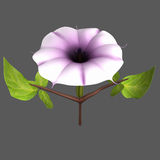 Datura Royalty Free Stock Image