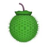 Daturafrukt Arkivbilder