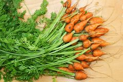 Daucus carota carrot Royalty Free Stock Photography