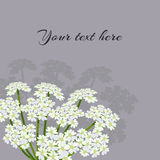 Daucus carota. Common names wild carrot, bird's nest, bishop's lace or Queen Anne's lace.  Flowering plant. Vector illustration Royalty Free Stock Photography